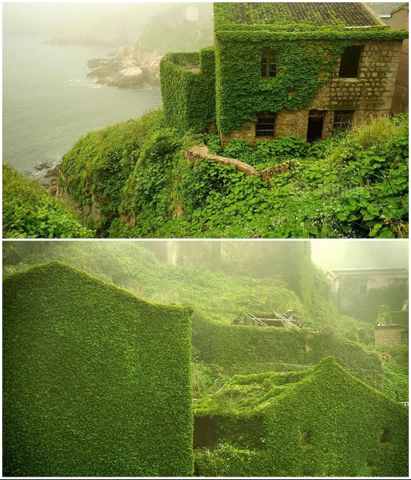 Благоприятные климатические условия стали причиной того, что дома очень быстро превратились в «плющевый» сад (Houtouwan, Китай). | Фото: pridiord.blogspot.com/ bigpicture.ru, © Jane Qing.
