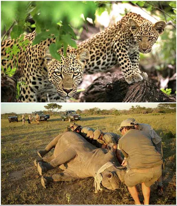 Гости могут отравиться на прогулку по чаще или принять участие в сафари с опытными сопровождающими (Kruger National Park, ЮАР). | Фото: africansafariexperts.com.