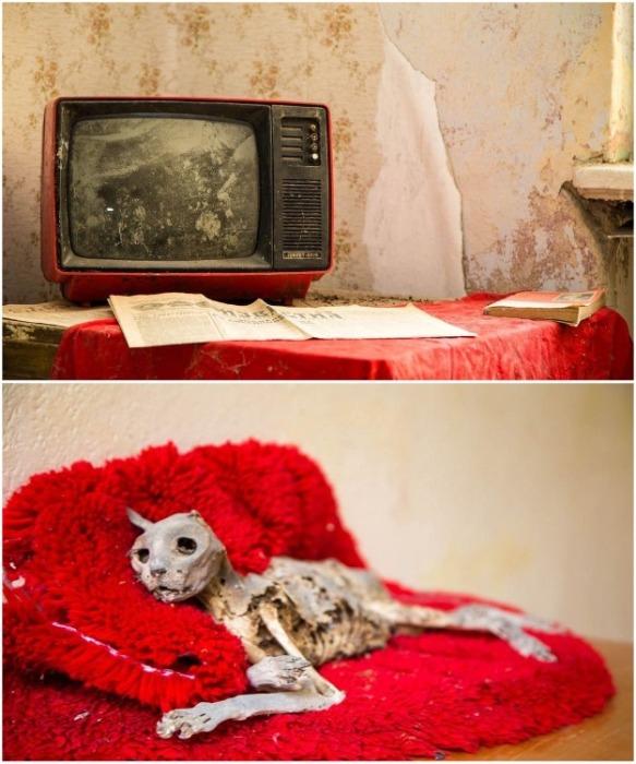 Люди не смогли вывезти ни ценную бытовую технику, ни домашних животных (Вюнсдорф, Германия). | Фото: bigpicture.ru.