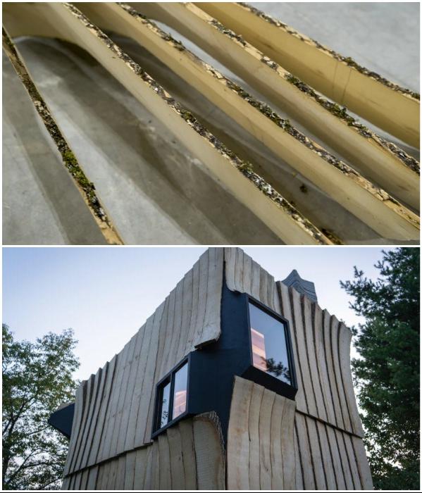 Благодаря роботизированной руке удалось распилить даже самые изогнутые ветки и стволы ясеней. | Фото: inhabitat.com.