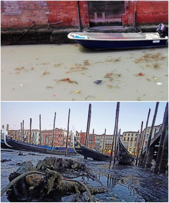 Частенько туристы, прибывшие полюбоваться каналами самого романтичного города в мире, видят их в таком неприглядном виде (Венеция, Италия). | Фото: vokrugsveta.ua.