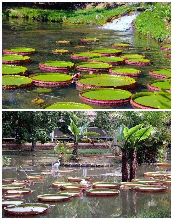 Ботанический сад в Рио-де-Жанейро (Бразилия). | Фото: tournavigator.pro.