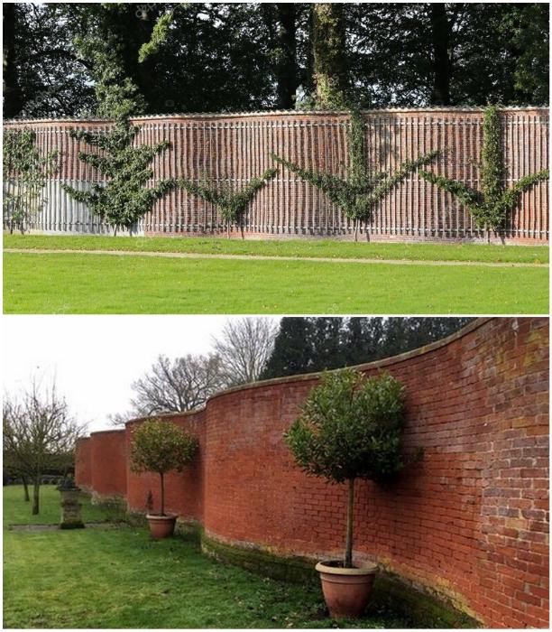 Подобные заборы хорошо защищают растения от ветра. | Фото: freston.net/ st2.depositphotos.com.
