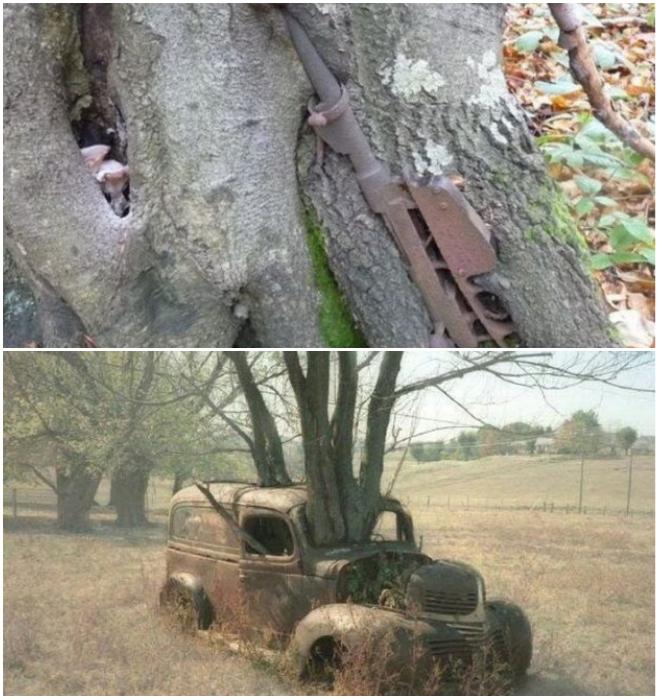 Особенно «богаты» подобными диковинки труднодоступные места отшумевших боев. | Фото: m.prikol.bigmir.net.