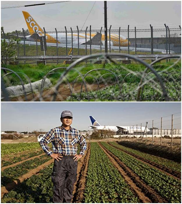 Грядки с овощами находятся рядом со взлетно-посадочными полосами Narita international airport (Япония).