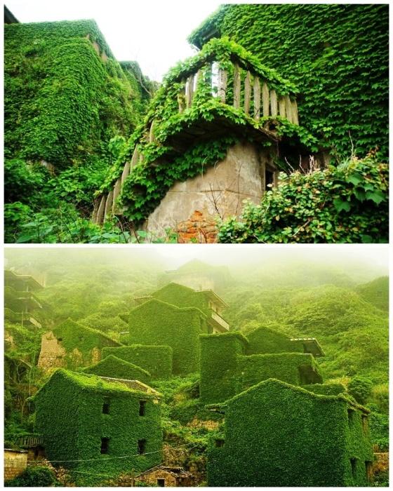 Все каменные строения со временем превратились в настоящий «плющевый» мир (Архипелаг Shengsi, Китай). | Фото: loveopium.ru.