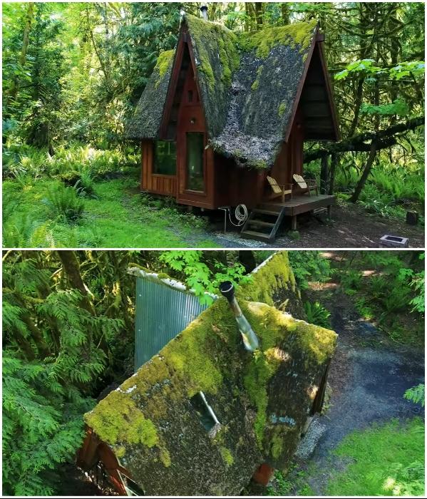 Чтобы связать воедино домик с высокой крышей и окружающий лес, вместо кровельного покрытия Джейкоб посадил мох. | Фото: youtube.com/ © Living Big In A Tiny House.