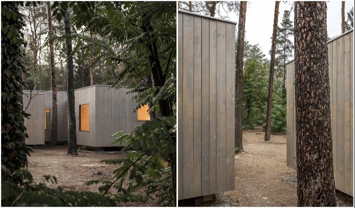В Германии построили жилой дом, который «обошел» каждую сосну так, что ни одно дерево не пострадало (Haus Koeris). © Zeller & Moye.
