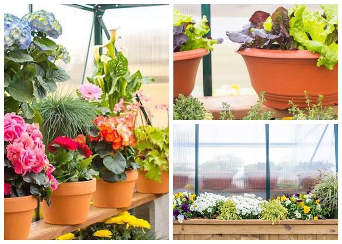 В мобильной теплице можно выращивать и овощи, и зелень и благоухающие цветы (дом-фургон «Эльза»). | Фото: tinyhousetown.net.