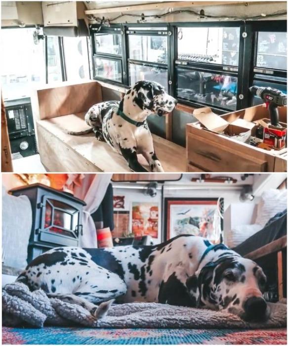 И для домашнего любимца пса Аполлона тоже нашлось местечко. | Фото: instagram.com/ sincewewokeup.