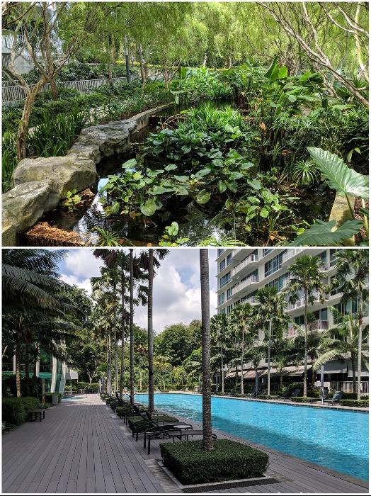 Для комфортного отдыха на открытом воздухе созданы пруды и бассейны («Tree House», Сингапур). | Фото: stackedhomes.com.