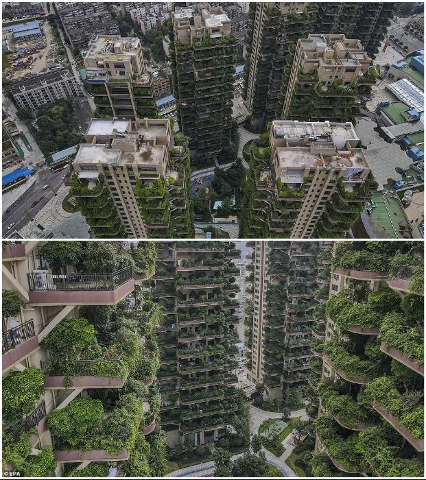 Разработчики проекта и власти города пообещали, что будут бороться с популяцией насекомых и организуют уход за растениями (ЖК «Qiyi City Forest Garden», Китай). | Фото: russian.people.com.cn.