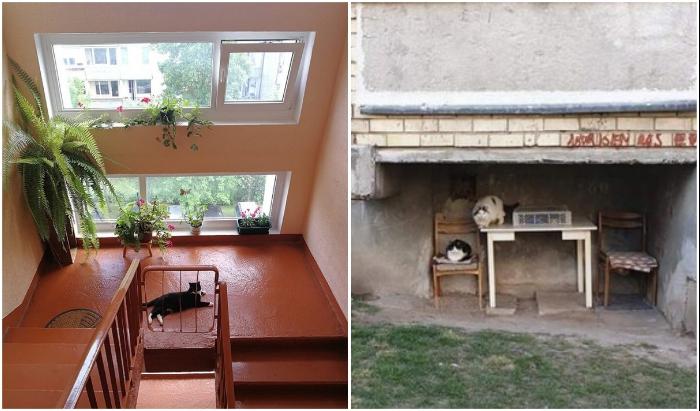 Кот в любой ситуации хозяин: забота о братьях наших меньших у литовцев тоже неискоренима. | Фото: gossip4000.twittospia.com/ boredpanda.com.