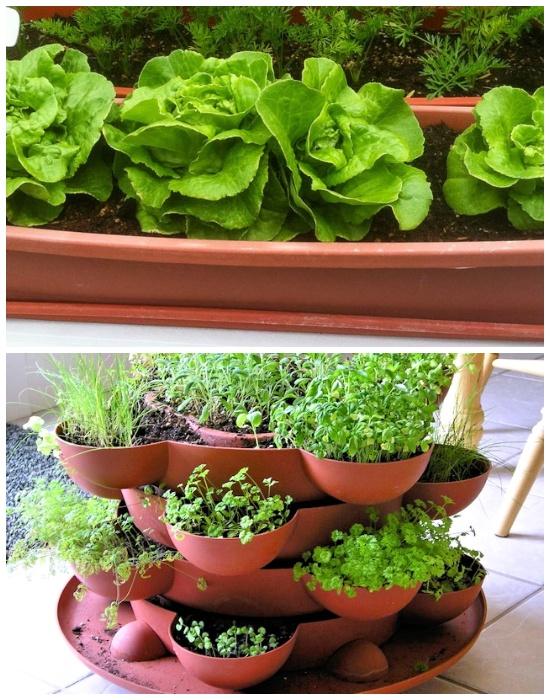 Пластиковые контейнеры – лучший вариант для организации мини-огорода на балконе.
