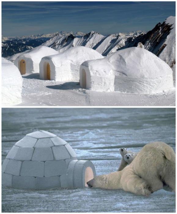 Эскимосское жилище имеет различные способы создания. | Фото: how-minecraft.ru.