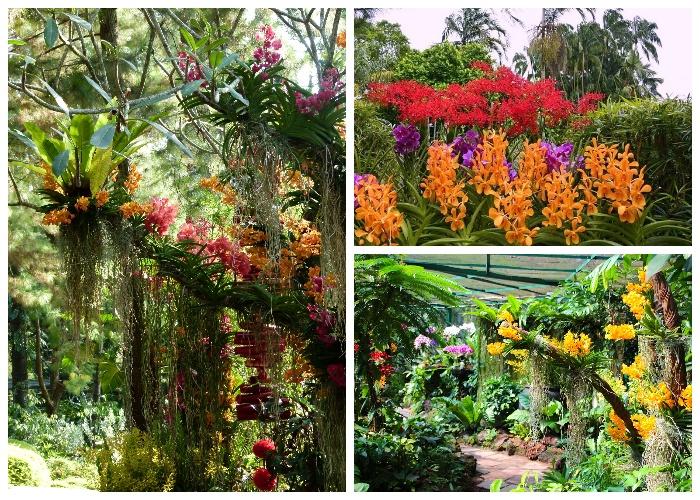 В Национальном саду орхидей собрана самая большая в мире коллекция этих волшебных цветов (Singapore Botanic Gardens). | Фото: traveltriangle.com.