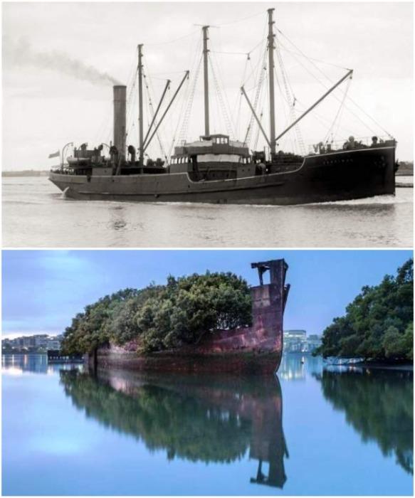Заброшенный «Корабль-лес SS Ayrfield» много лет выполнял грузовые рейсы (Австралия). | Фото: free-eyes.com.