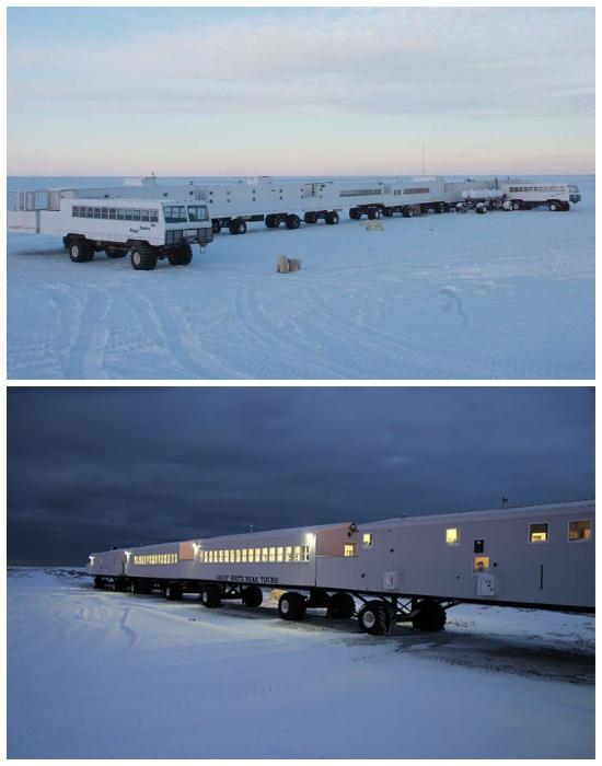Первый арктический отель Tundra Lodge, который организовывает незабываемые туры за Полярным кругом (Канада).