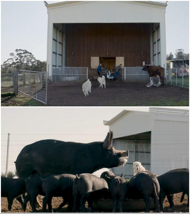 Чтобы попасть в необычный дом, нужно пройти мимо этих милых животных («Longhouse», Австралия). | Фото:  realestate.com.au.