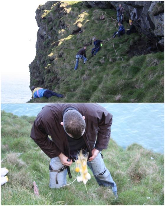 Сотрудники Общества Ellidae Island летом собирают яйца птиц, но зачастую возникают сложности с их доставкой (о.Эдлидаэй, Исландия). | Фото: heimaslod.is.