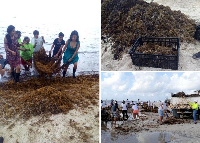 Уборка побережья стала источником доходов для большинства людей (Кинтана-Роо, Мексика). | Фото: journal.homemania.ru.
