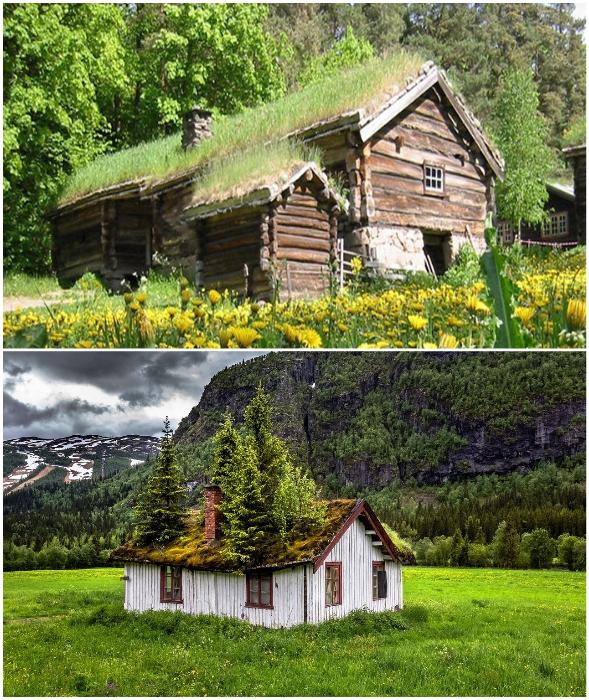 Благодаря особой технологии на крышах домов росла не только трава, но и деревья.