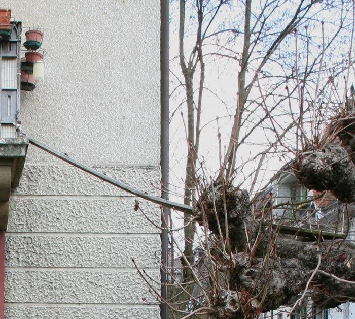 Если рядом с домом стоит дерево, то котейке придется быть акробатом. | Фото: © Brigitte Schuster.
