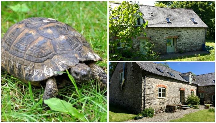 Для черепахи отведена своя территория в одном из садов усадьбы (The Old Dairy, Великобритания).