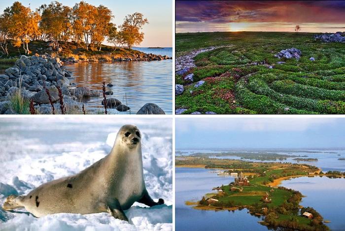 Завораживающая суровая природа Соловецкого архипелага.