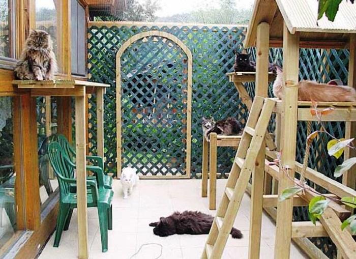 Настоящий рай для кошек.| Фото: sdelaibalkon.compsdom.ru.