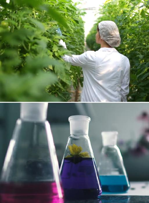 В Smart Forest City будут выращивать и перерабатывать овощи, а так же выпускать собственные фито-препараты (проект Stefano Boeri Architetti). | Фото: youtube.com/ TomoNews US.