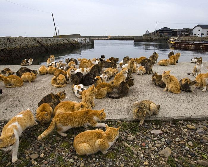 Японский остров кошек.