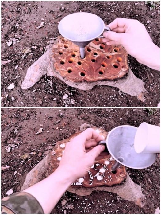 Обычная лейка с тонким носиком поможет наполнить отверстия аммиачной или калиевой селитрой.