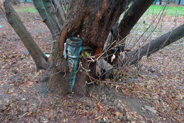 «Союз могучего дерева и старой водозаборной колонки». | Фото: moscowseasons.com.
