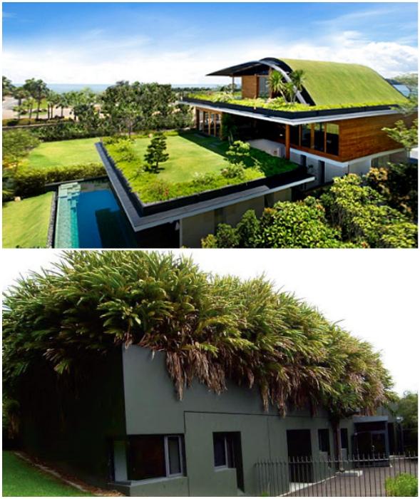 С развитием технологий, облегчающих конструкцию и уход за растениями, зеленые крыши становятся популярными и в других странах мира.