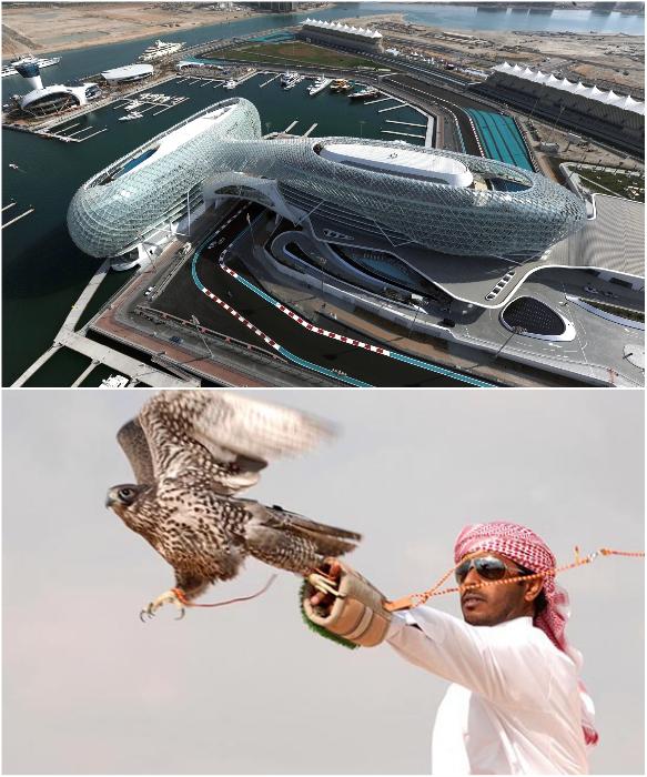 ДубаЙ за последние годы стал элитным центром спортивных состязаний. | Фото: tcc.com.ua/ visitdubai.com.
