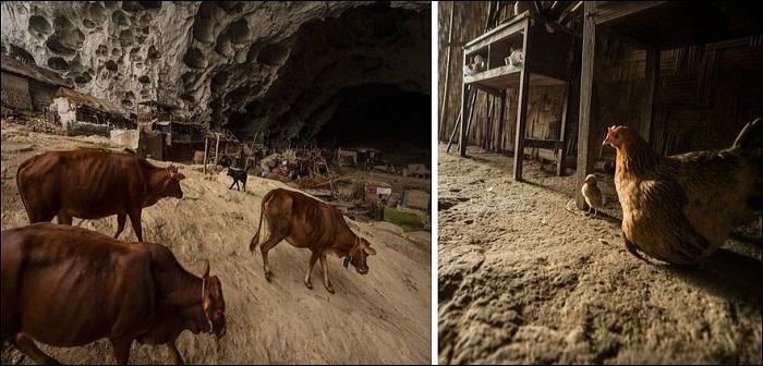 Деревенские жители разводят домашних животных и птиц (Чжундун, Китай). | Фото: bugaga.ru.