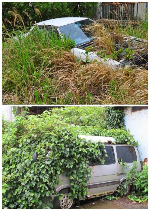 Жители острова бросили свои квартиры, имущество и даже автомобили (Остров-призрак Икешима, Япония).