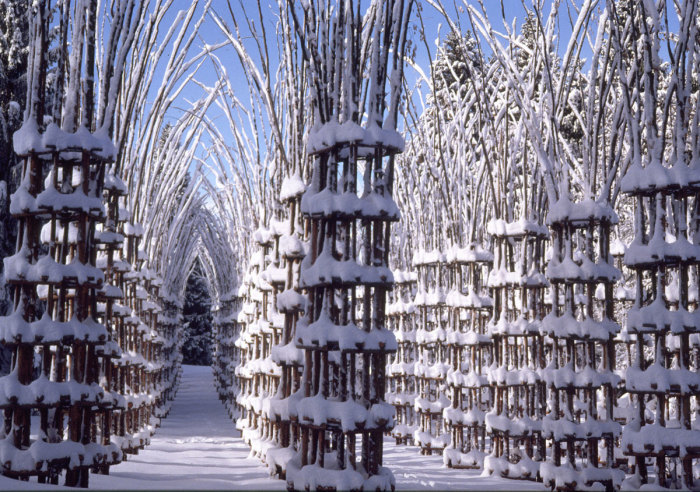 Особенно отчетливо просматривается конструкция храма в снежную пору («Cattedrale Vegetale», Италия).   Фото: erospoeta.blogspot.com.