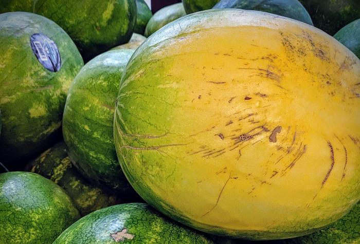 Слишком большое и светлое земляное пятно – верный призрак невкусного арбуза. | Фото: spudsproduce.com.