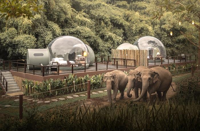 Чтобы слоны не смогли повредить прозрачные номера-пузыри, «Jungle Bubbles» их установили на специальной площадке и огородили территорию. | Фото: news.destination-asia.com.