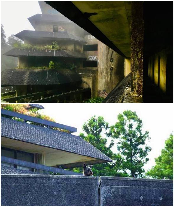 Два десятилетия в отеле хозяйничали лишь туман, сторож и собаки (Monte Palace, Азорские острова).