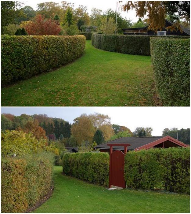 Каждый овальный дворик окружен живой изгородью.