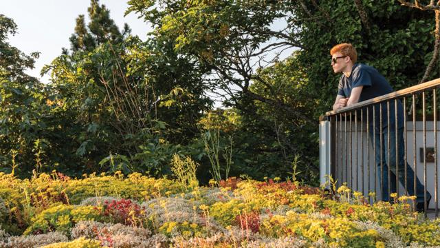 Даже в перенаселенных мегаполисах можно организовать зеленую зону на придомовой территории (Tsuga Townhomes, Сиэтл).   Фото: residentialdesignmagazine.com.