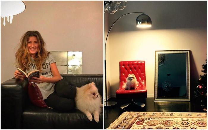 Роскошную мебель из натуральной кожи любит не только звездная хозяйка, но и ее очаровательные псы.
