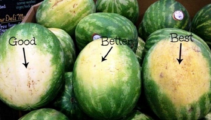 Пятно на боку арбуза всегда подскажет спелый ли арбуз. | Фото: redplatecatering.com.