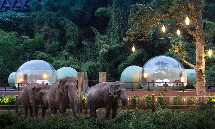 В Таиланде туристы могут переночевать в прозрачных номерах-пузырях в окружении слонов