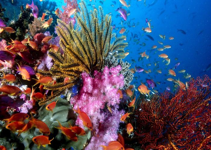Невероятный подводный мир островов Фиджи.