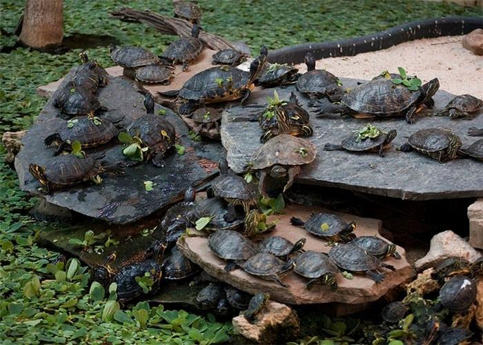 В пруду поселили целую колонию черепах (Вокзал Аточа в Мадриде).