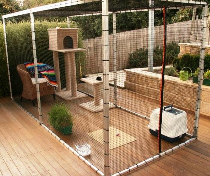 Почему собак выгуливают, а кошки изолированы от внешнего мира?  | Фото: sobakibalabaki.com.